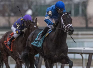 Gotham Stakes 2019 at Aqueduct, picks and analysis