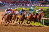Today's Horse Racing Picks: Rebel Stakes 2019 at Oaklawn Park
