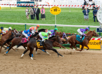 Preakness Stakes 2019 Picks