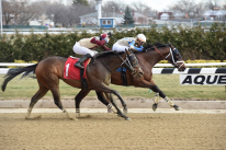 Aqueduct Horse Racing on TV: picks and Analysis for February 23rd 2019