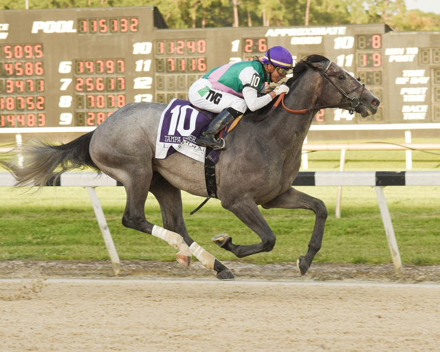 Kentucky Derby Betting Preview